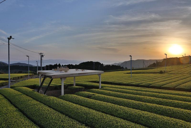 Stories20-SagaGuide-Tea-800